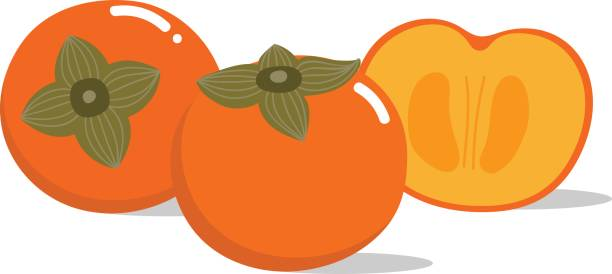 persimmon vector and pattern